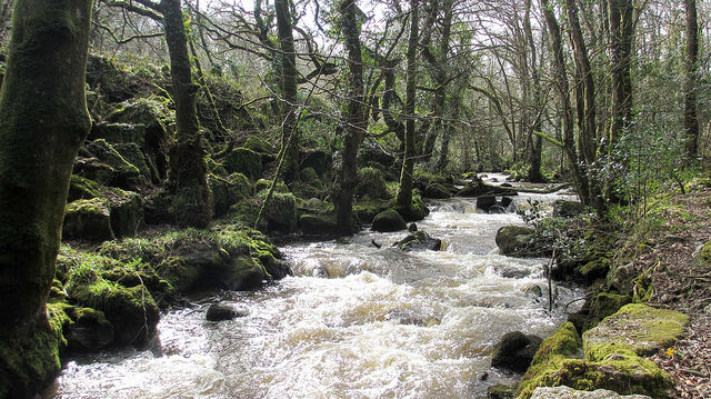 Luxulyan Valley, Cornwall - Goulding O'Neill