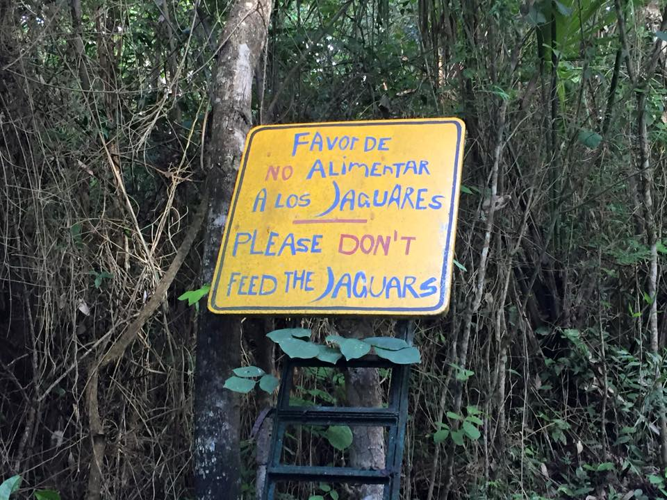 do not feed the jaguars